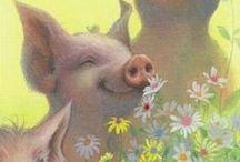 Varkens / Gezellige leuke varkens