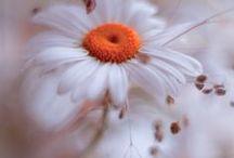 Bloemen / In al zijn geuren en kleuren