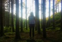 forest / Forests