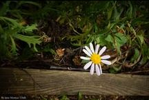Photography by Jane Monica Tvedt / Norway - Nature, sea, Landscape, Flowers, plants, animals.... By Jane Monica Tvedt