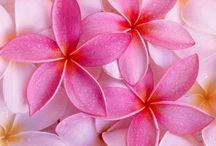 Flowers..