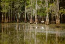 Env • Swamps