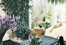 Green love - house plants / Необычные комнатные растения, декор горшков, идеи, мысли, вдохновение.
