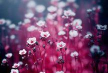 Env • Plants