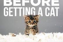 Cat caring