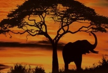 Africa / Travel can be free! check out: http://itsoneworldtravel.com/how-to-travel-for-free/