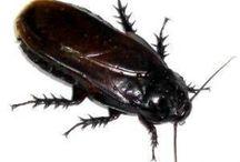 Bugs / by Toni Knapp