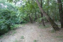 Δάσος ανωγειου / Δάσος ανωγειου