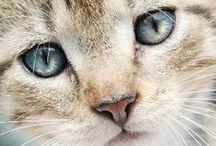 """Chat / """"Le temps passé avec un chat n'est jamais perdu.""""                  (Sidonie-Gabrielle Colette) / by Benoit"""