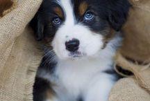 Puppy's / De schattigste puppy's te zien op dit bord