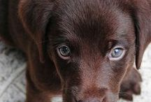 K9 PUPS / Puppies are the cutest and they have specific nutritional needs! Here are tips on caring for your new pup.