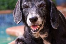 K9 SENIORS / Senior dogs need special care. Here's how to best care for your aging dog.
