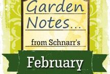 February Garden Notes / Things to do in the garden in February
