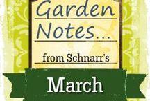 March Garden Notes