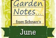 June Garden Notes / Things to do in the garden in June.