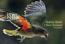 Birds - NZ