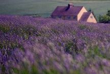 Provence Palette / Just as the name suggests, this flower of a region is lush with tones of lavender, dusty pink and natural tans. These are the idyllic colors of a naturally beautiful countryside, where breezes blow warm and blossoms accent with soft pastels and bold dashes of brightness.