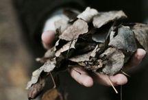 Dead leaves: fallen / 창작 이미지&아이디어 공유