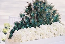 Peacock Weddings