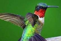 Beautiful Birds / by Jack and Nancy McCarron