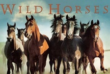 """WILD HORSES..COULDN'T DRAG ME AWAY!!. / """"ALL HORSES DESERVE AT LEAST ONCE IN THEIR LIVES A LITTLE GIRL"""""""