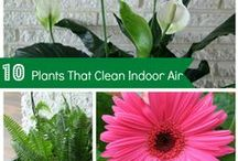 HOUSE PLANTS / Plant to purify the air!  / by L.