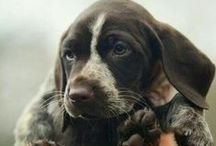 puppy. / by Amanda Macedo