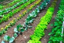 Get Growing! / Helpful tips for all of you home gardeners!