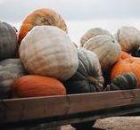 Autumn Hues / All photos © Stephanie Paxton