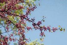 Spring Growth / All photos © Stephanie Paxton