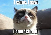 Grumpy Cat Obsessed! / #Grumpycat / by Jennifer Craig