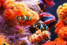 Under the sea.~
