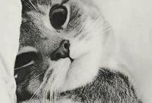 Cute Cats and Kittens / Cute pictures of Cats and Kittens