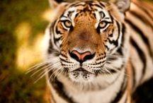 Animals / Animals / Cats