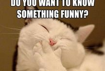 Hilarious / Funny bits