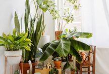 →Garden/Plants