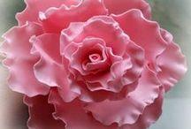 beauty inspiration and creativeness / beauty of life