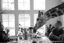 Giraffes are cool.