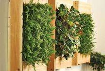Ogrodowe inspiracje || Gardening