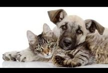 Just Cute Animals / Just plain cute or funny pictures of Cat and Dogs