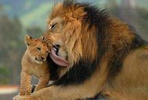 Dieren in het wild / Ik ben gek op jonge dieren