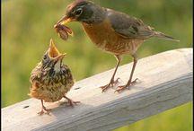Vogels enzo
