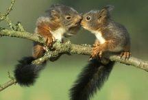 Kleine dieren