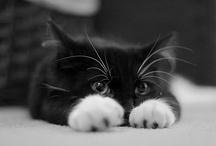 Cats & Cutes