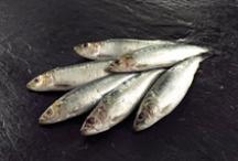 JRJ Fresh Fish