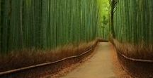 Destination: Japan / Travel, tips, photos and more from the mystical, magical Japan. #travel #japan