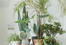 Plants & Flowers / beauty