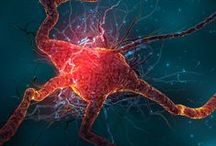 Activa Tu Neurona / LA RIGUROSIDAD DE LA CIENCIA. EL ESTILO DEL PERIODISMO