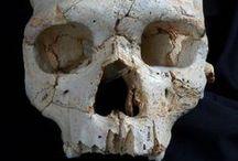 El primer asesinato de la historia / El estudio del cráneo 17 de la Sima de los Huesos, en Atapuerca, sugiere que la muerte de aquel individuo pudo ser un asesinato.