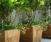 ✿⊱✿ Garden ~ Flower box ✿⊱✿